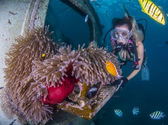 フィッシュアイマリンパーク海中展望塔, Diver and Fish Eye Underwater Observatory