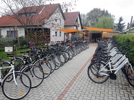 Gesztenye Biciklikolcsonzo