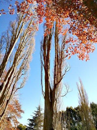 Timaru, Новая Зеландия: IMG_20180506_144918_large.jpg