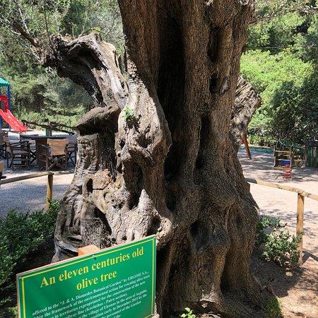 Chaidari, اليونان: Botanical Garden Diomedes