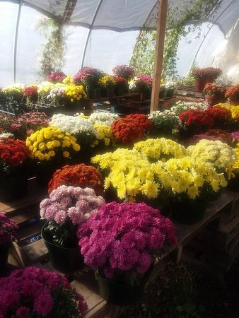 Madison Heights, Βιρτζίνια: Mums & Pumpkins are available in the fall!