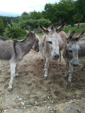 Bourdeaux, ฝรั่งเศส: Les ânes du camping