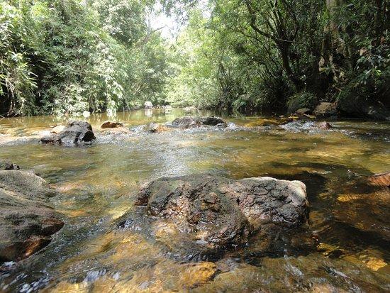 Water Stream near Kanneliya Forest Resort