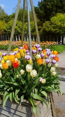 RHS Garden Harlow Carr: DSC_0027_large.jpg