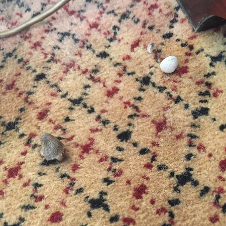Hilton St Anne's Manor, Bracknell: Mushrooms growing out of carpet