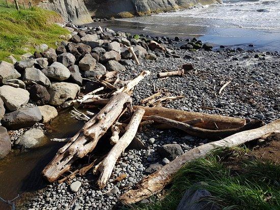 Driftwood at Onaero Beach