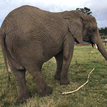 Knysna Elephant Park: photo2.jpg