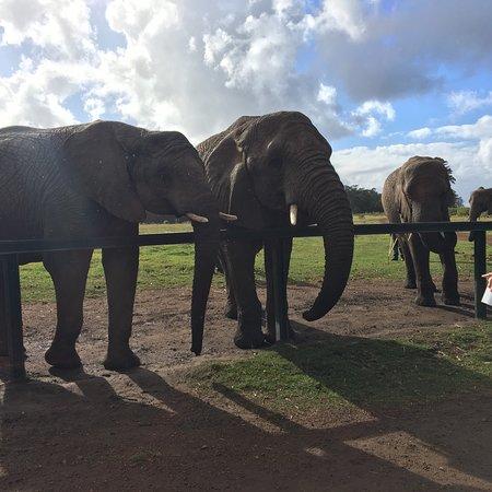 Knysna Elephant Park: photo3.jpg