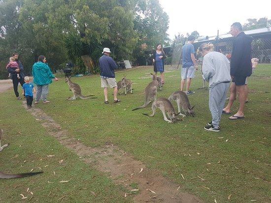 Horizons Kangaroo Sanctuary照片