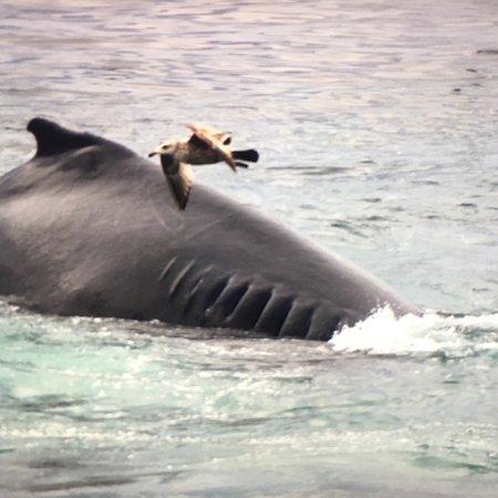 Hyannis Whale Watcher Cruises: photo0.jpg