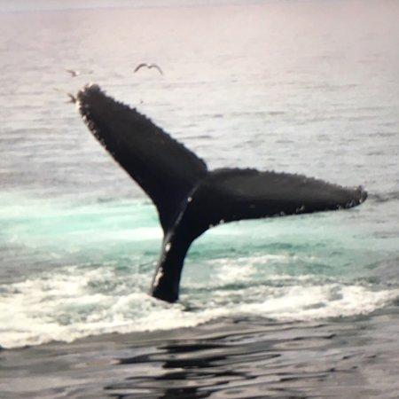 Hyannis Whale Watcher Cruises: photo2.jpg