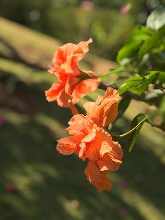 Pousada Luz e Paz: Flores da Varanda