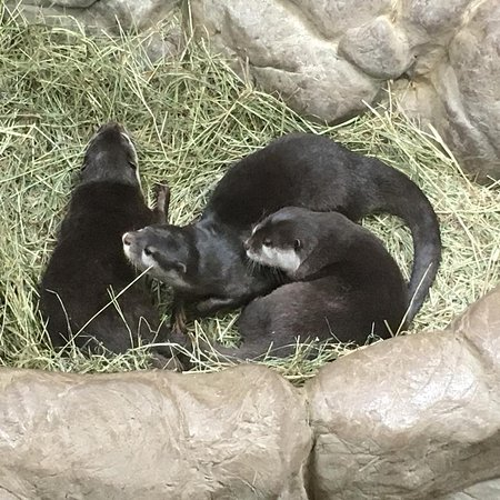Apple Valley, Миннесота: Small Clawed Otters