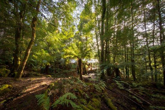Tarkine Trails: Photograph thanks to Jarod Pulo