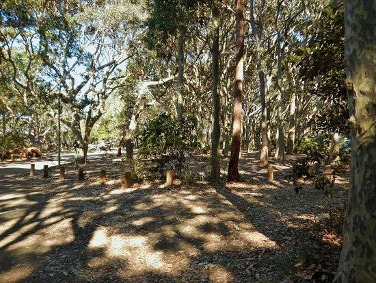 Bodalla, Australia: Bush Camp Sites