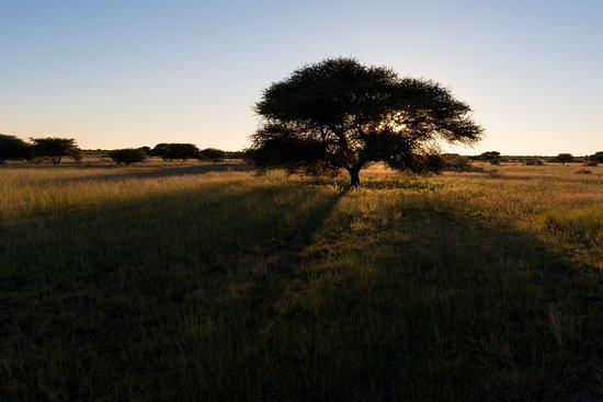 Reserva de Fauna del Kalahari Central, Botsuana: Typical terrain