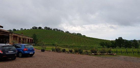 Tenuta Casteani farmhouse, wine & events in Tuscany Maremma: 20180505_181613_large.jpg