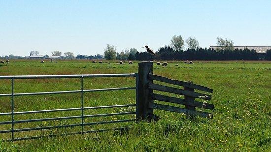 Landsmeer Foto