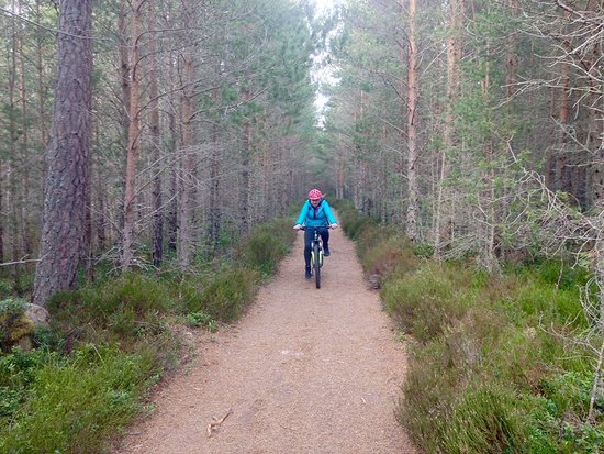 Aviemore, UK: Cycling up a trail from Coylumbridge