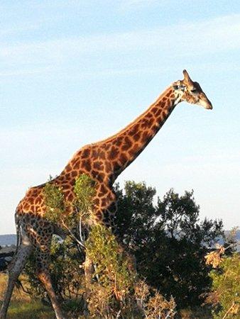 Driekoppen, Sudáfrica: IMG_20180505_072927_large.jpg