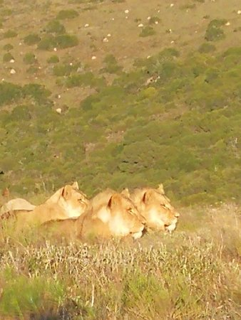 Driekoppen, Sudáfrica: IMG_20180506_074246_large.jpg