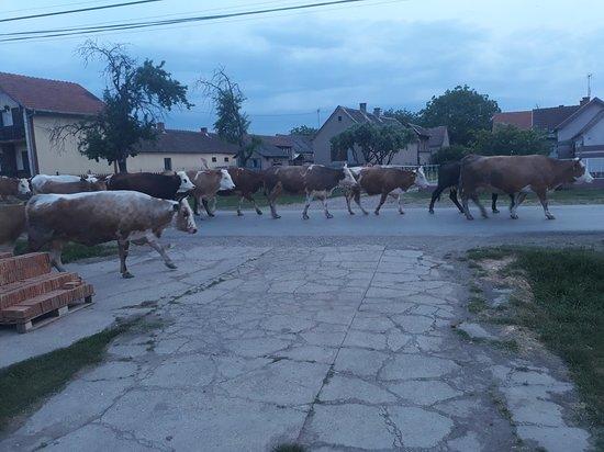 Zasavica, Serbia: 20180502_193443_large.jpg