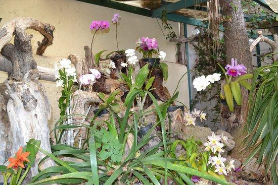 Jardín de Orquídeas de Sitio Litre: les orchidées