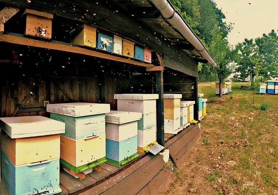 Honey shop Damir Tafra: Mini nucs above hive