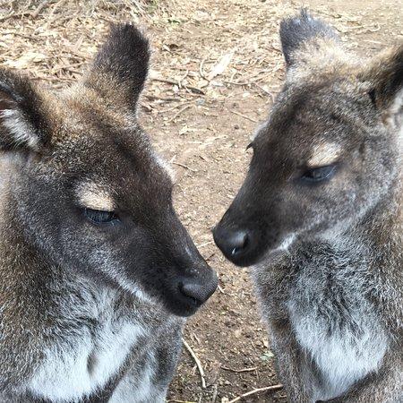 Seddon, Australia: photo0.jpg