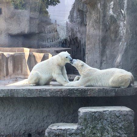 Budapest Zoo & Botanical Garden: photo1.jpg