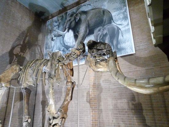 Museo della Venere e dell'Elefante