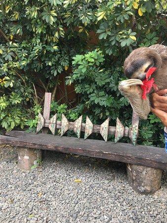 Casa Mariposa: Sloth