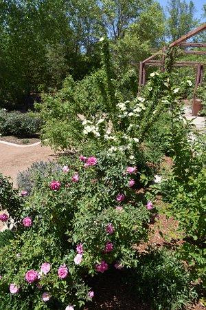 ABQ BioPark Botanic Garden (Albuquerque) - 2018 All You Need to Know ...