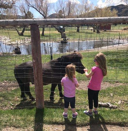Fairmont Hot Springs Resort: Petting Zoo