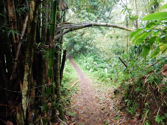 La Soufriere Cross Country Trail: Beautiful Trail