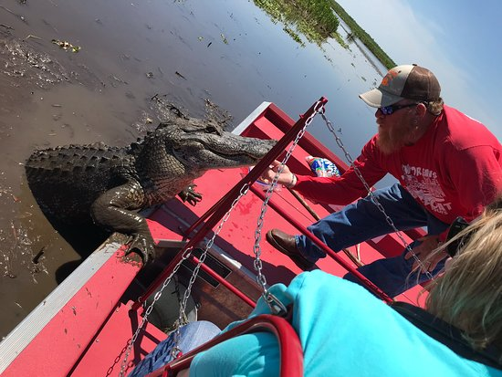 Marrero, LA: alligator tour gone wild