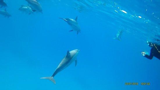 Dolphin House - Sha'ab Samadai Reef: Dolphin House Reef (Sha'ab Samadai)