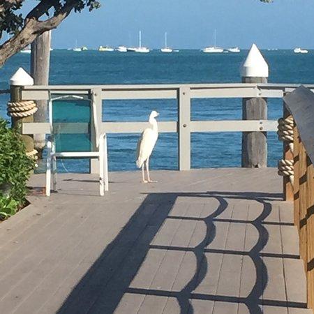 The Galleon Resort And Marina : photo2.jpg