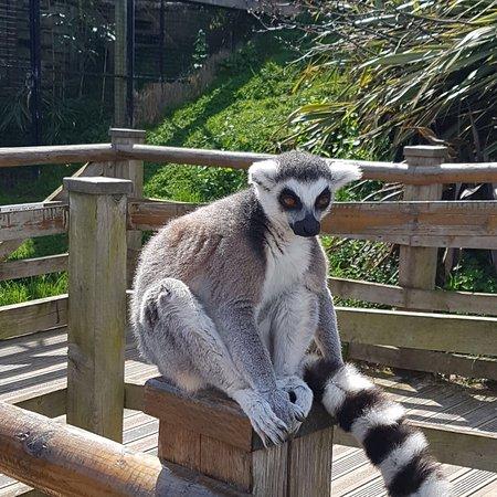 Welsh Mountain Zoo ภาพถ่าย