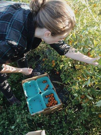 Ρέντμοντ, Ουάσιγκτον: Homegrown Sprouting Farms