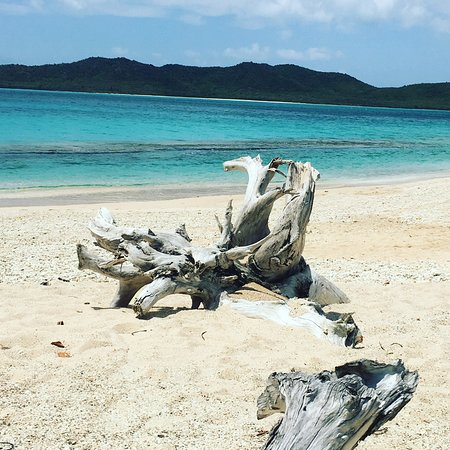 Hermitage Bay Driftwood On The Beach