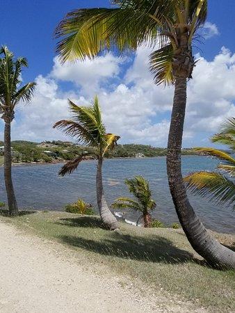 Falmouth, Antigua: IMG-20180504-WA0003_large.jpg
