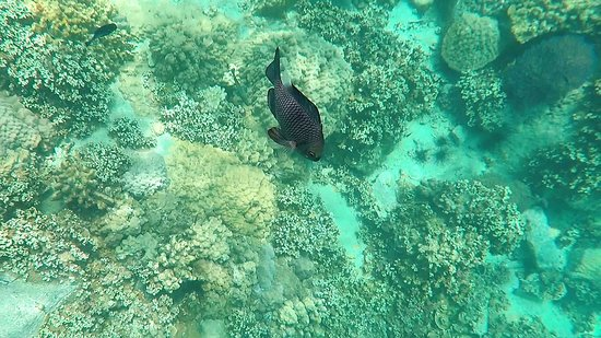 Koh Mak Divers: Some of the coral and marine life we saw - unknown species