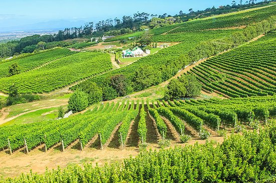 Viator VIP: Cape Winelands ...