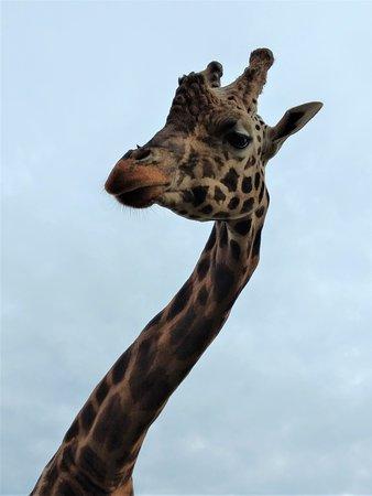Hamilton Zoo: Come visit!