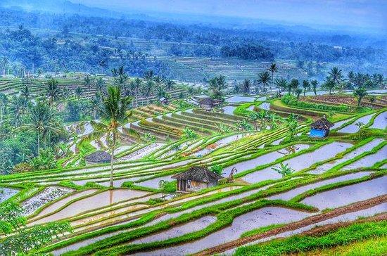 Bali Unesco World Heritages Jatiluwih ...