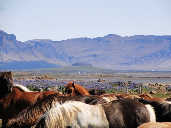 Borgarnes, Iceland: Mountains and horses