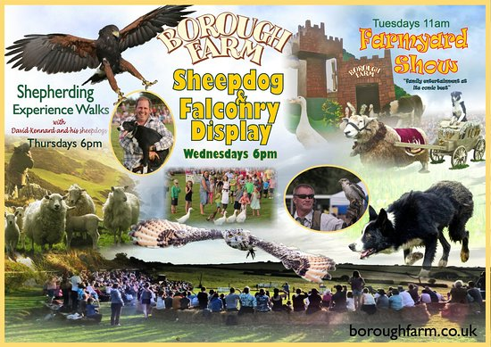 Вулакомб, UK: Borough Farm Sheepdog Shows