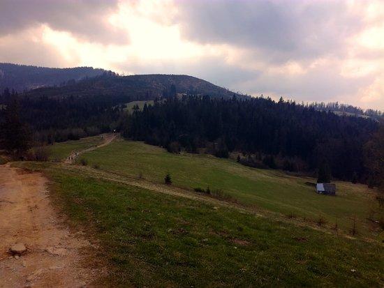 Wegierska Gorka, โปแลนด์: Podejście na Halę Boraczą