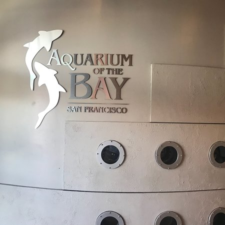 Aquarium of the Bay: photo3.jpg